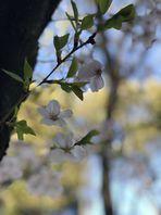 最近のTattoo&カバーアップTattooと春のお花達☺